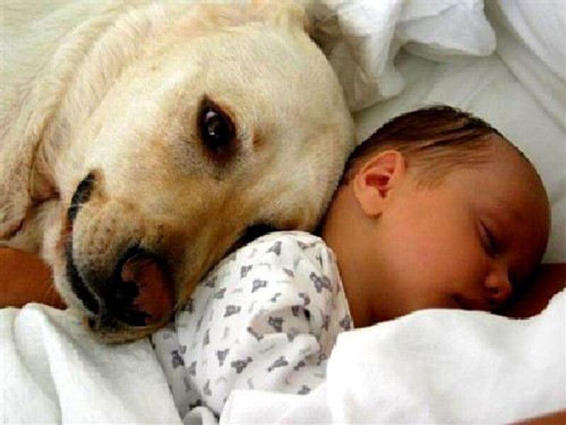 dog baby 16