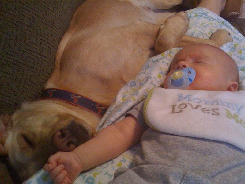 dog baby 19