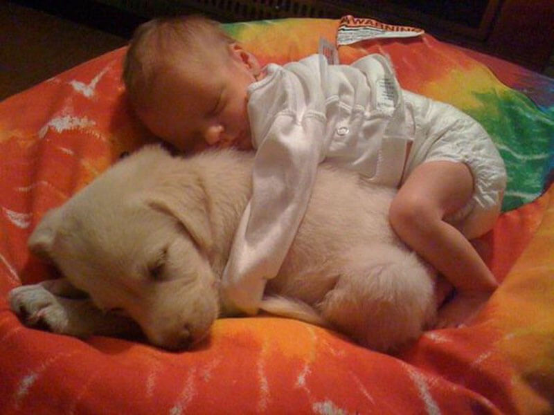 dog baby 5
