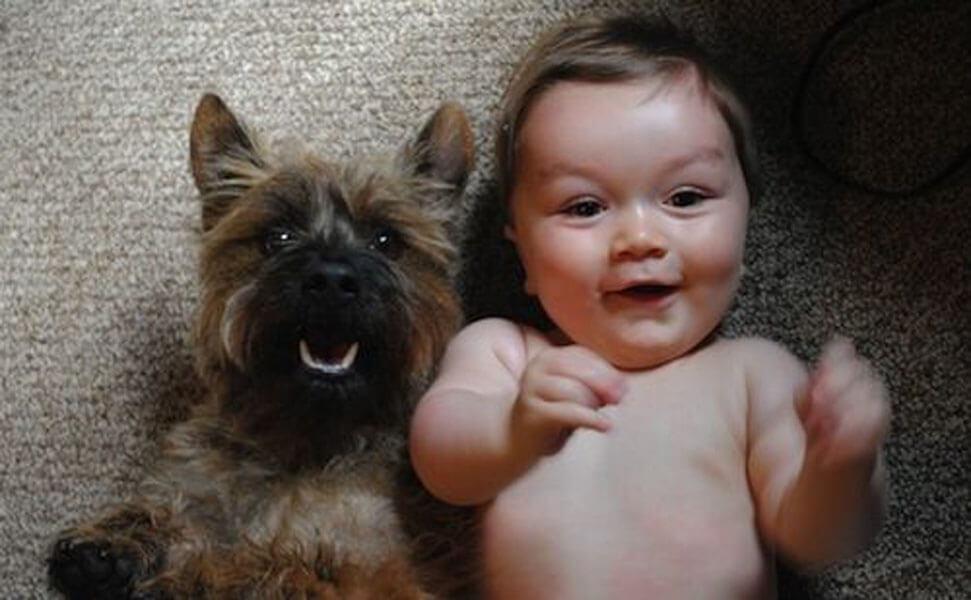 dog baby 6