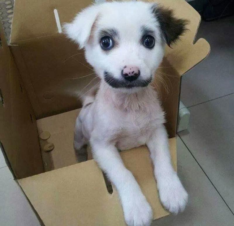 AnimalLoveEdits_01-62429.jpg