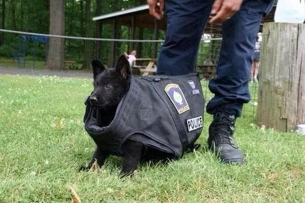 puppyfails-cop-74239-64826.jpg
