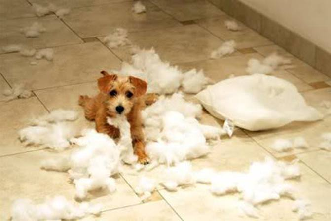 puppyfails-pillow-33809-53098.jpg