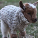 turtleneck-goat-80484-125x125-45688.jpg