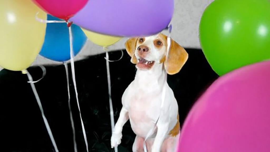 dog-balloons-38787-15935