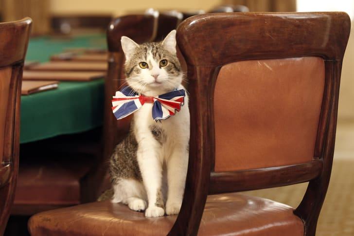 Larry British Prime Minister Cat