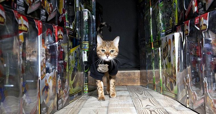 Millie Bandai warehouse guard cat