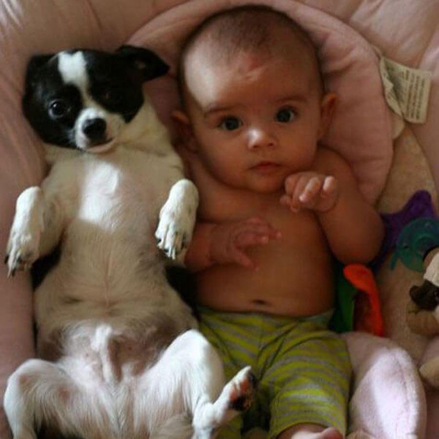 dog-baby-1-32943
