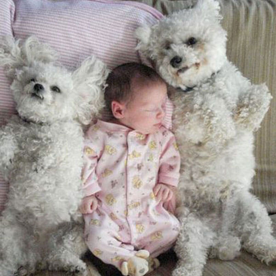 dog-baby-10-97374