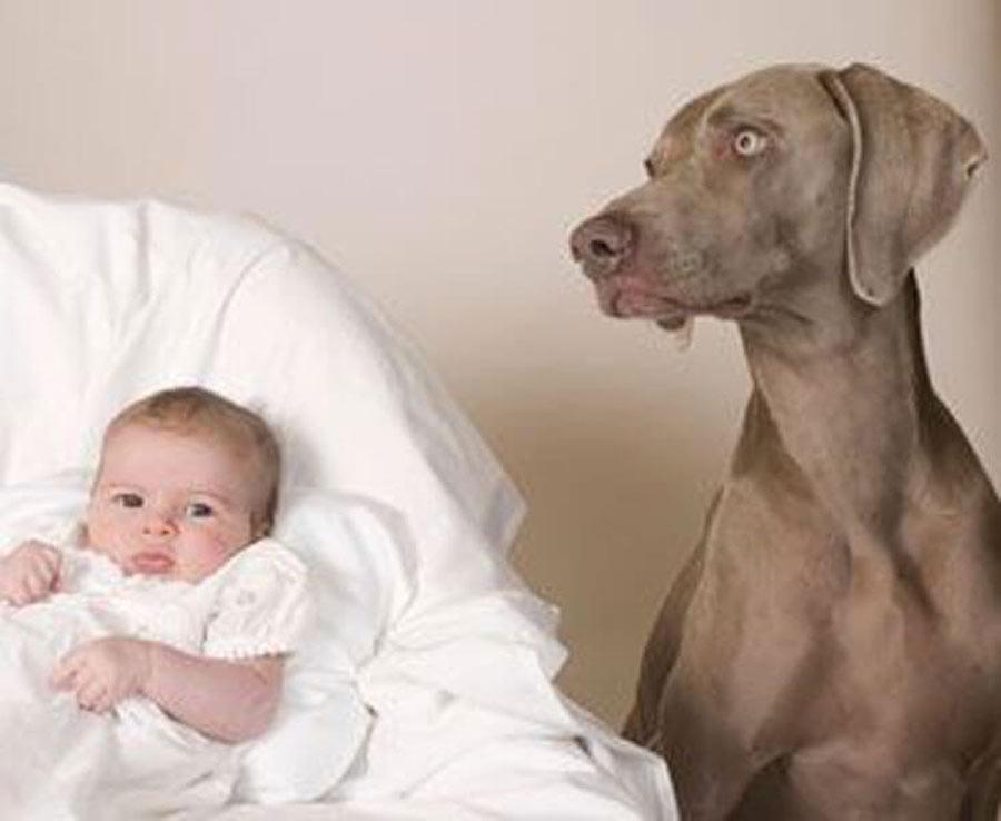 dog-baby-3-69572