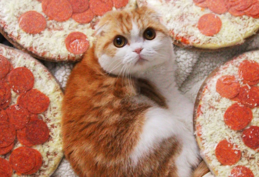 waffles the cat model