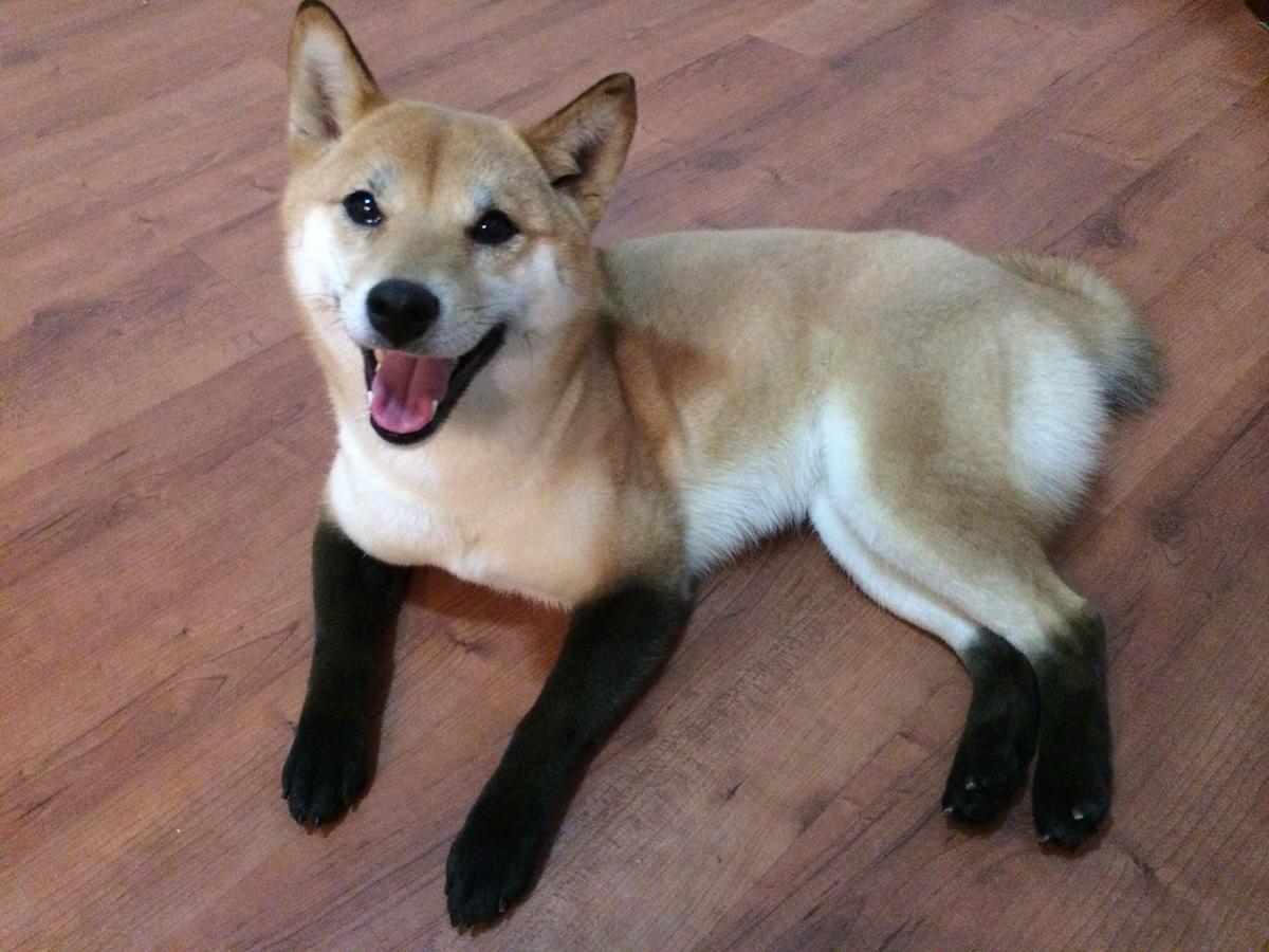 pupper with black feet fur