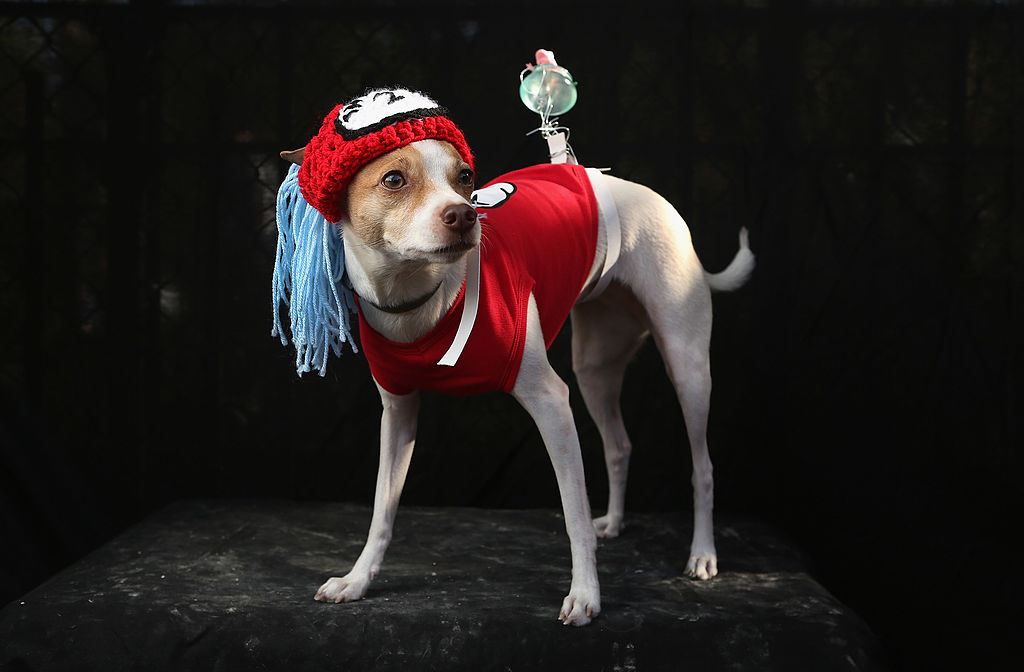 toy fox terrier dressed as Thing 2 from the cat in the hat