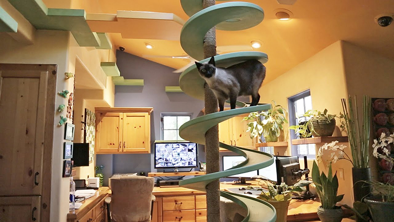 A cat climbs down a spiral railing in a kitchen