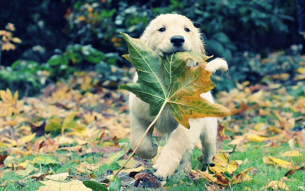 Puppy_in_autumn_leaves (1)