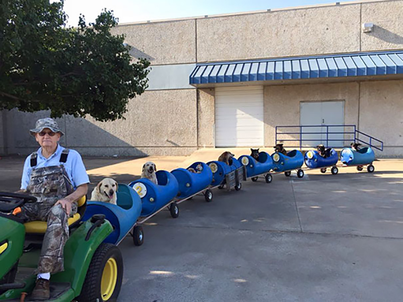 An old man drives a toy train full of dogs