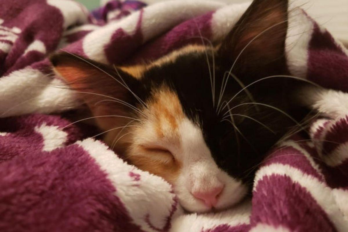 kitten under covers