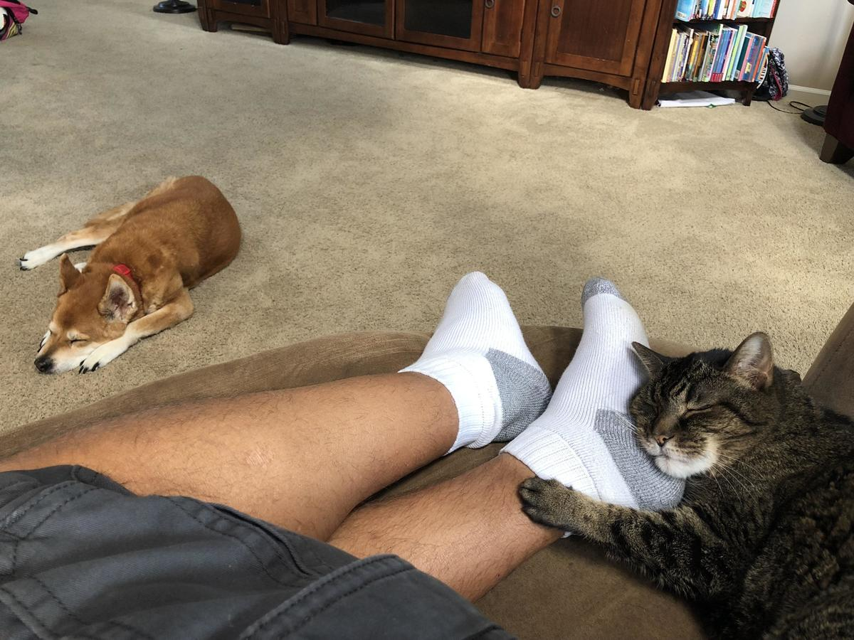 Cat sleeps on owner's foot while dog sleeps nearby