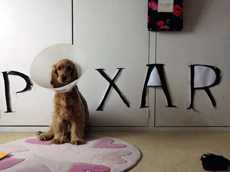 pixar dog