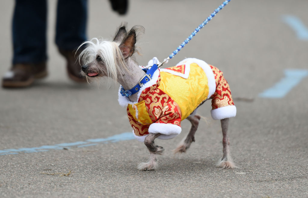 This Hairless Dog Is Perfect If You Have Allergies
