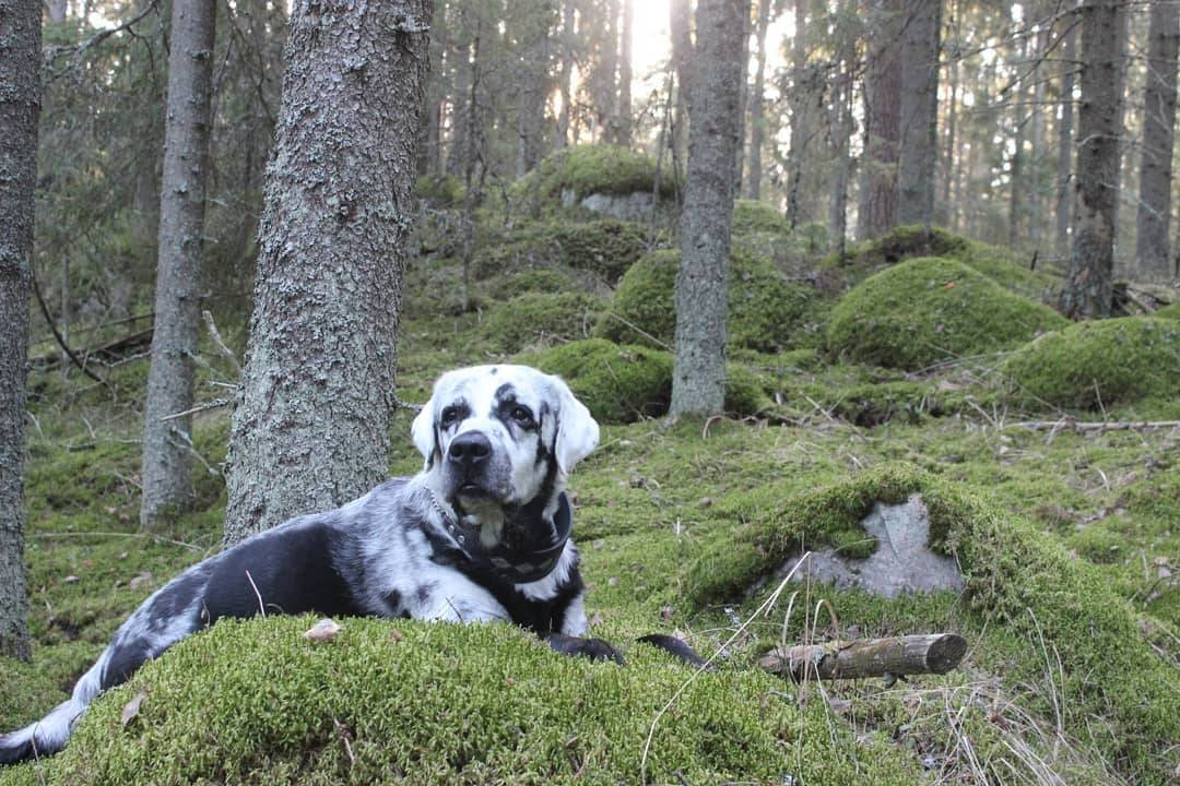 a dog hanging out in the forest