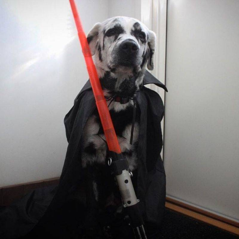 a dog dressed up as a character from Star Wars
