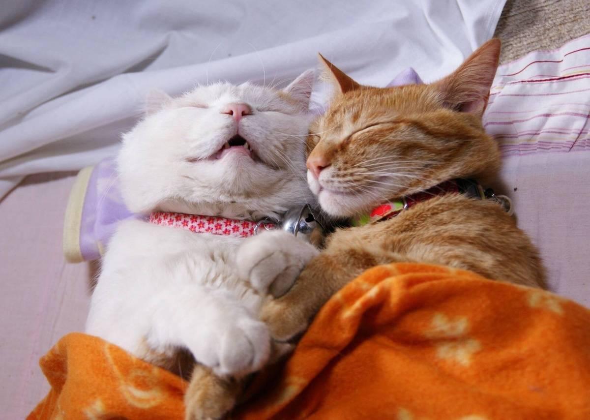 cat-couple