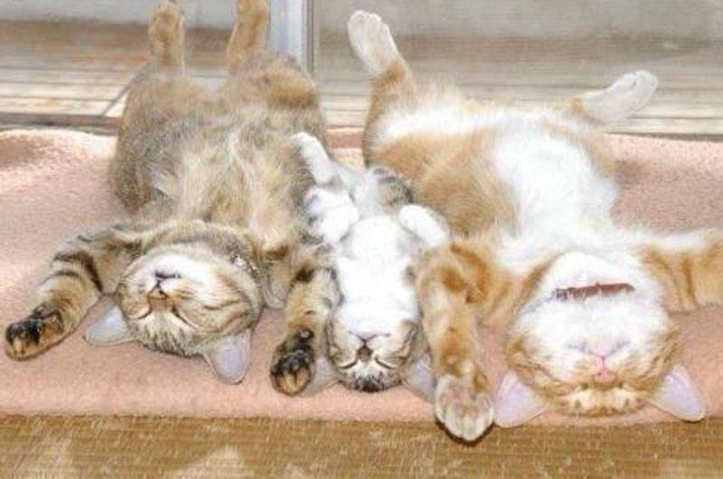 family of cats asleep