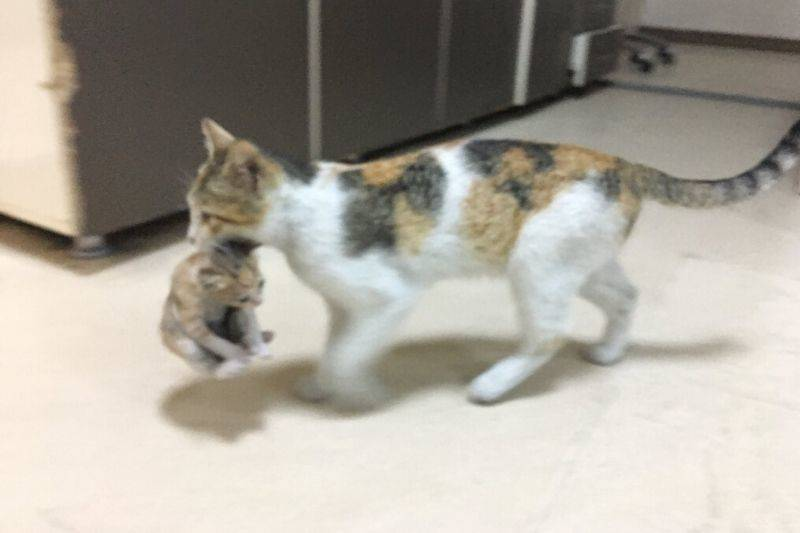 mother and kitten at hospital in istanbul