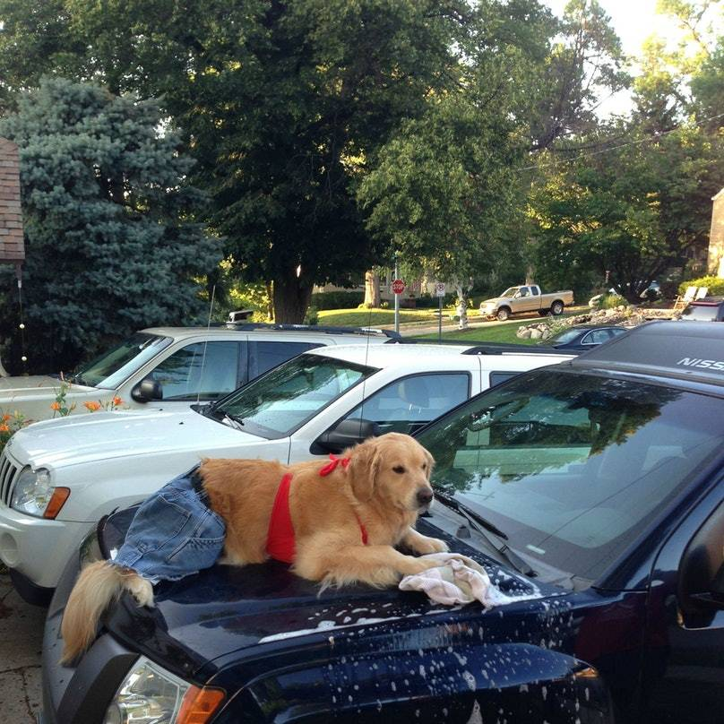 dog washing car