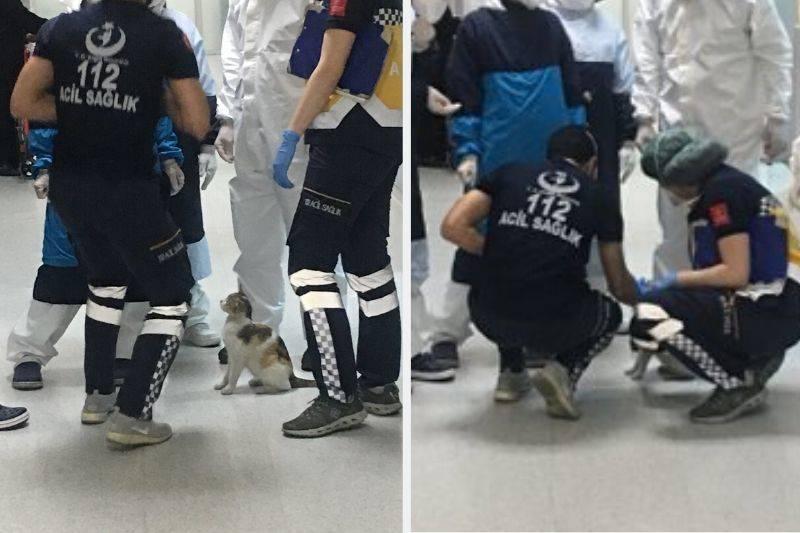 sick kitten medics in instanbul