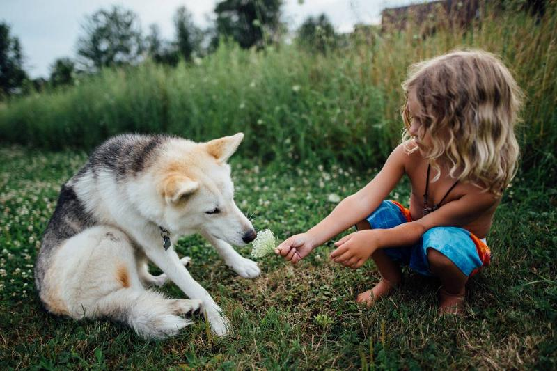 toddler playing with dog