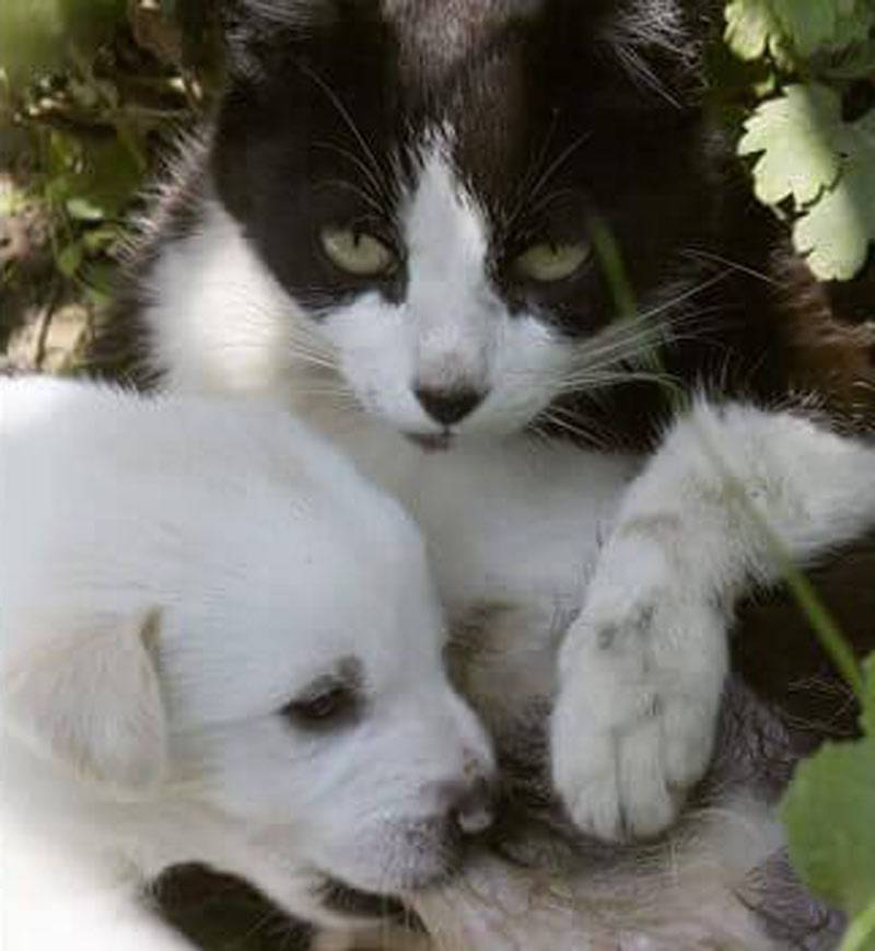 dog-and-kitten-35215