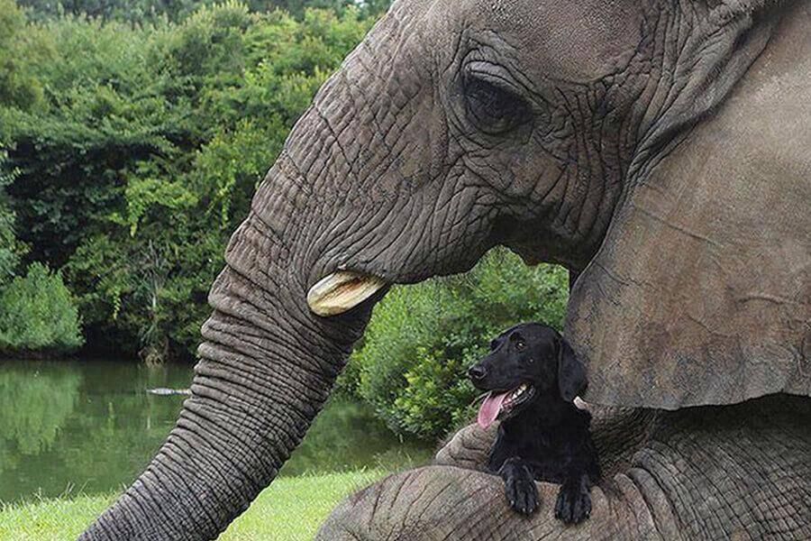 elephant-and-dog-go-swimming-59793